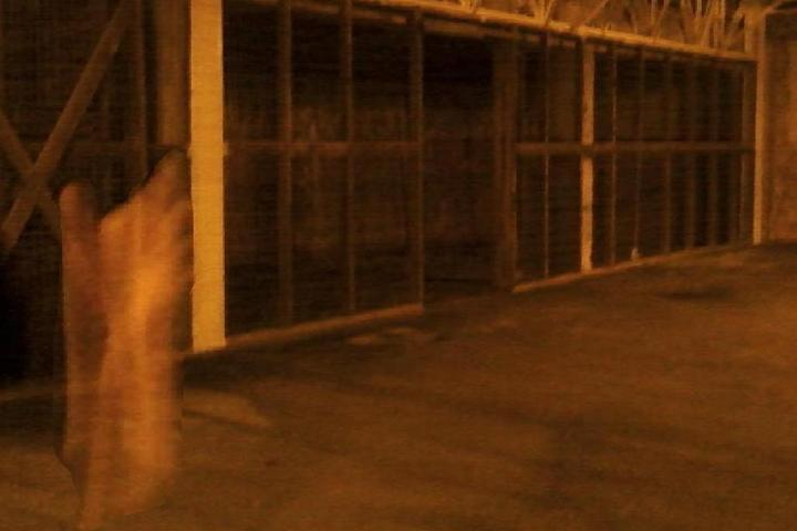 Pet Friendly Chattanooga Ghost Tours, Inc