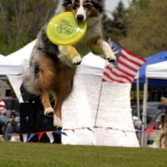 Disc Dogs a favorit at River Place Dog Bowl Events!