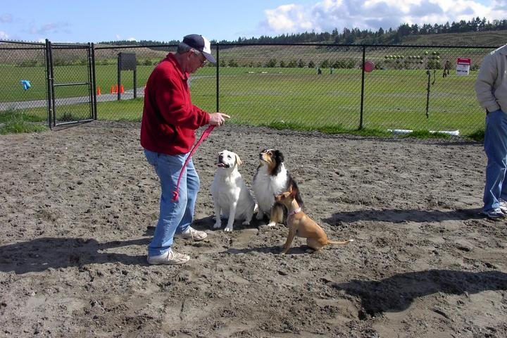 Pet Friendly Chambers Bay Off Leash Park & Beach