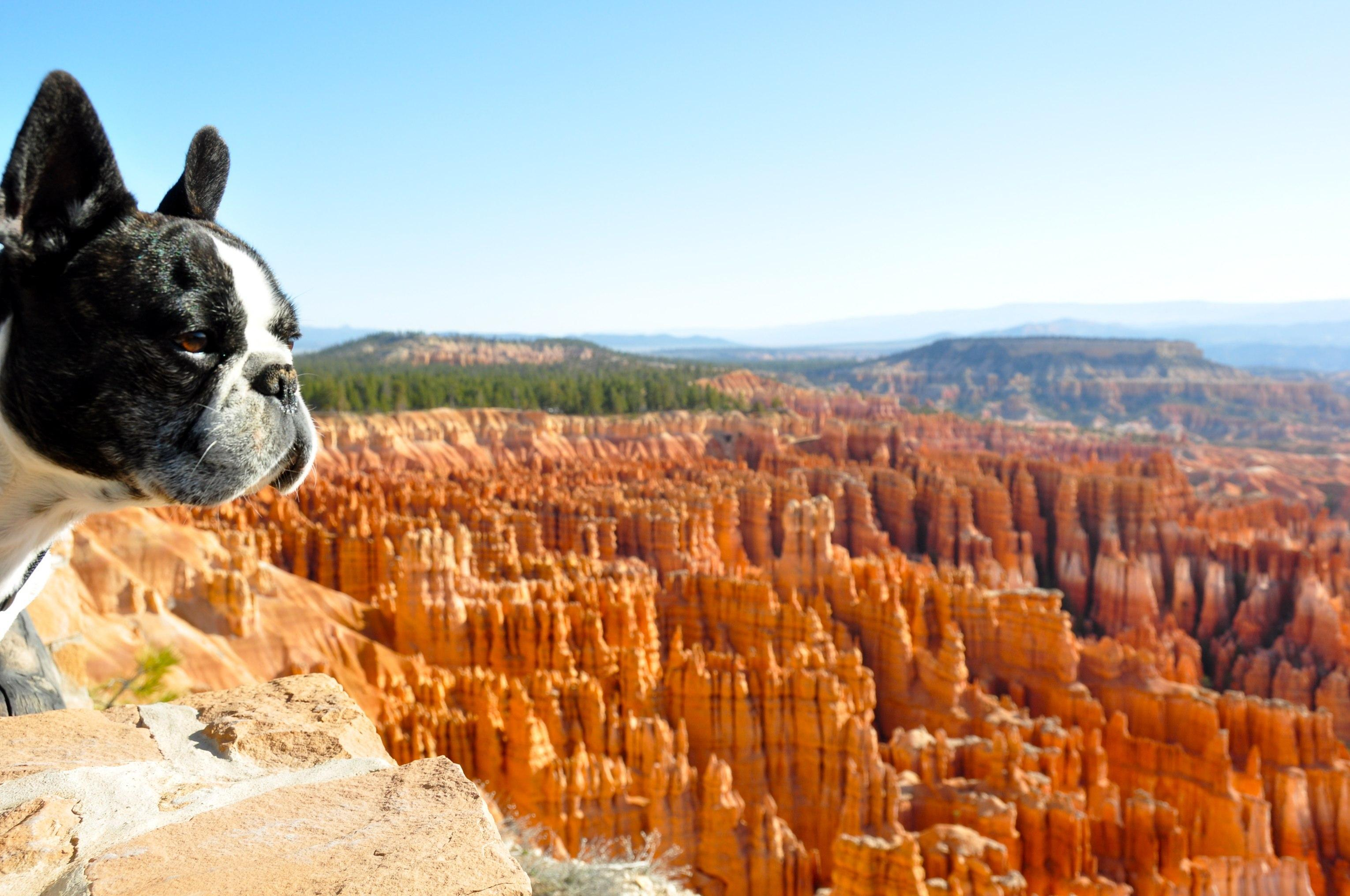 Dog Friendly Campgrounds In Utah