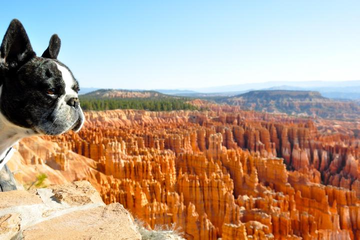 Dog Owner's Guide to Bryce Canyon, UT