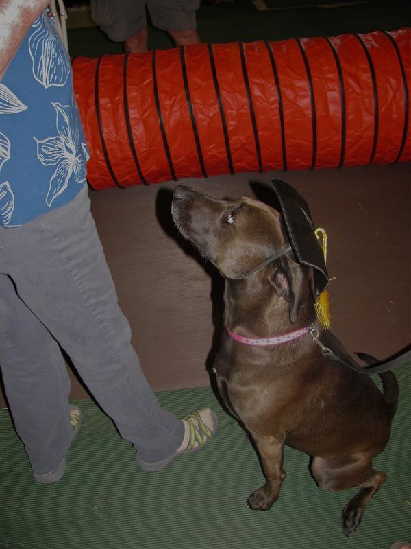Dog Friendly Hotels Punta Gorda Florida