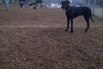 Pet Friendly Airport Dog Park