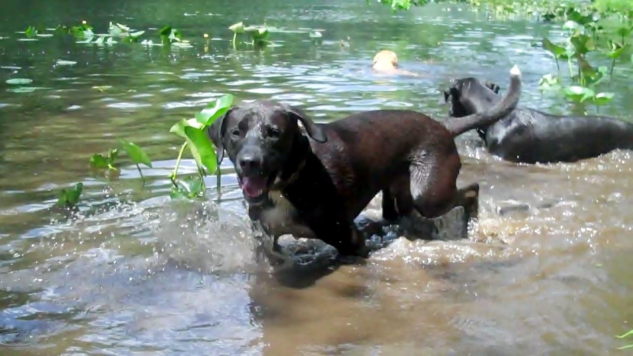 Dog Friendly Campgrounds In Ct