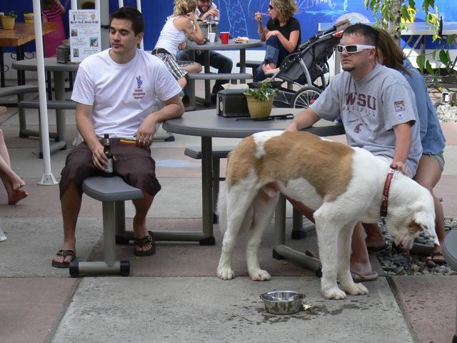 Dog Friendly Leavenworth Wa