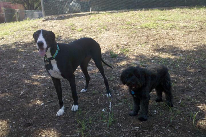 Pet Friendly Tybee Island Dog Park near Jaycee Park