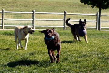 Pet Friendly Bayou Gulch Dog Park