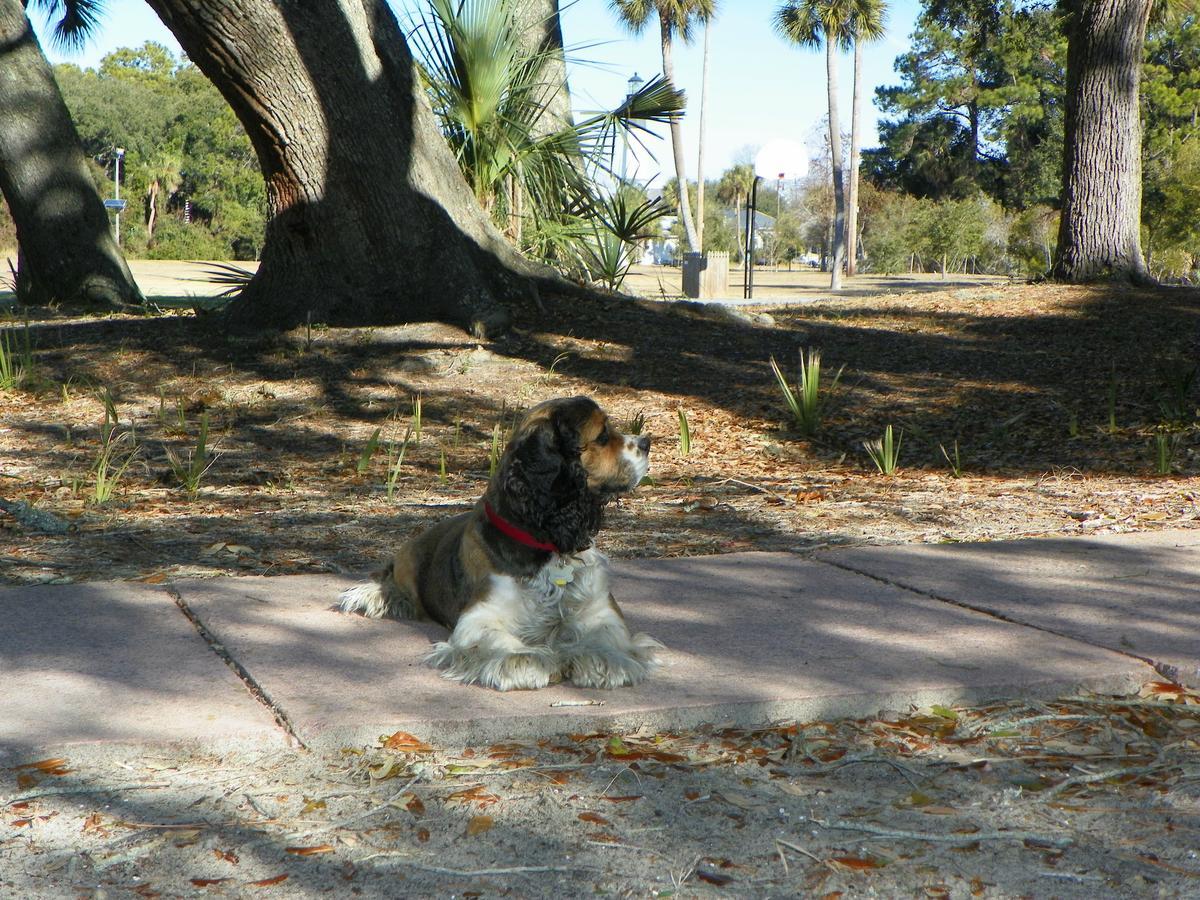 Dog Friendly Tybee Island Rentals