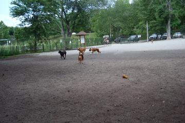 Pet Friendly Benjamin Banneker Park