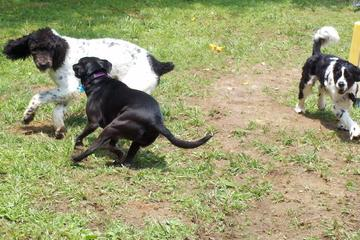 Pet Friendly Barks and Recreation Doggie Daycare and Boarding