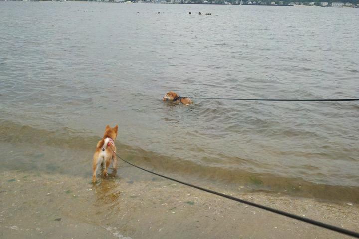 Pet Friendly Sandy Hook