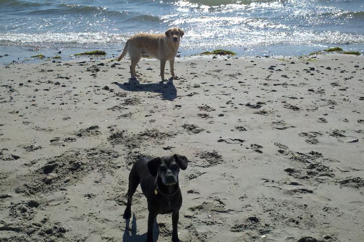 Pet Friendly Nahant Doggie Beach