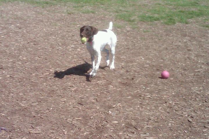 Pet Friendly Doggie Dugout
