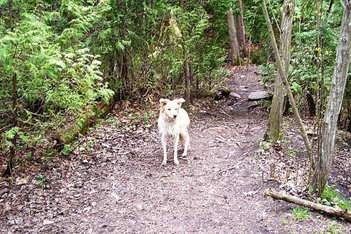 Pet Friendly Harmony Valley Off Leash Dog Park