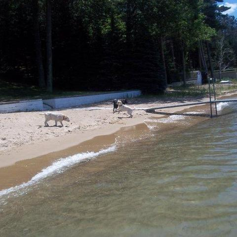 Dog Friendly Higgins Lake Mi Bring Fido