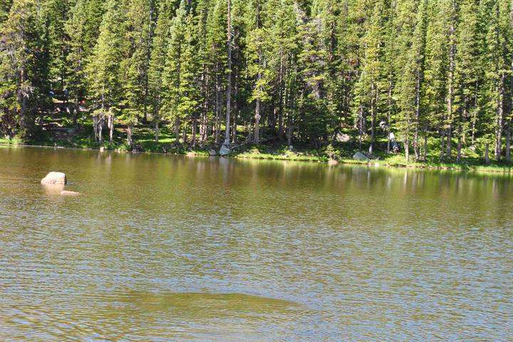 Pet Friendly Waterdog Lakes Trail
