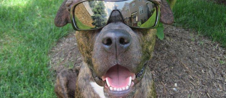 Dog Friendly Princeton, NJ - Bring Fido