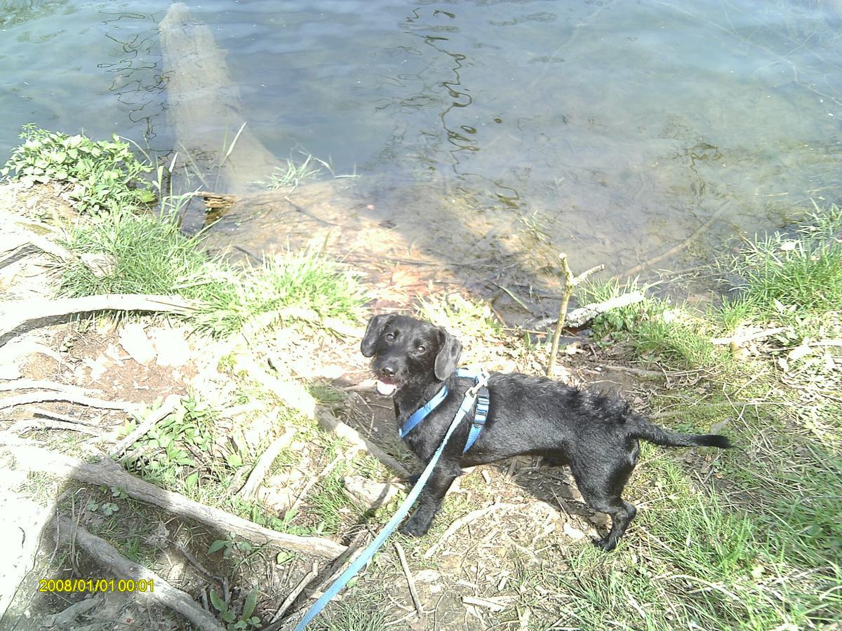 Dog Boarding Bristol Tn
