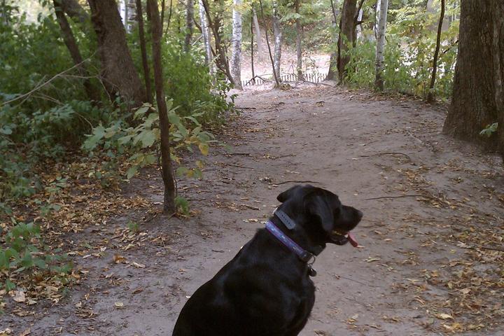 Pet Friendly Staring Lake Dog Park