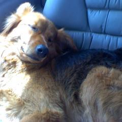 ROAD TRIP Dawg