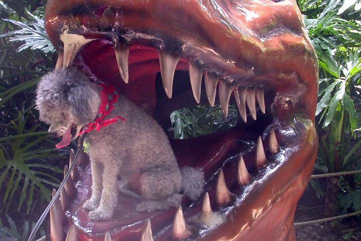 Pet Friendly Dinosaur World