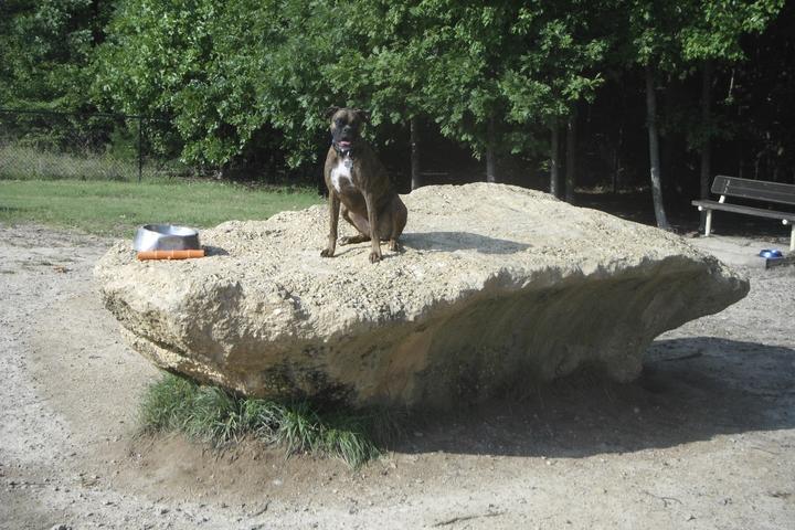Pet Friendly South Run Dog Park