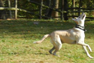Pet Friendly French Broad River Dog Park