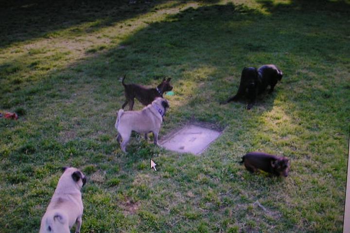 Pet Friendly Little Rascals Pet Care