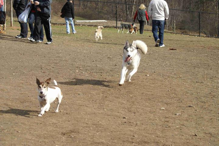 Dog Friendly Activities in Mountainside, NJ - Bring Fido