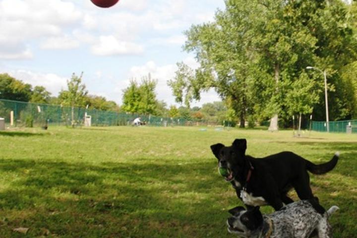 Pet Friendly Southwest City Dog Park at Willmore Park