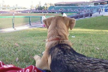 Pet Friendly Blue Buffalo Dog Park at San Manuel Stadium