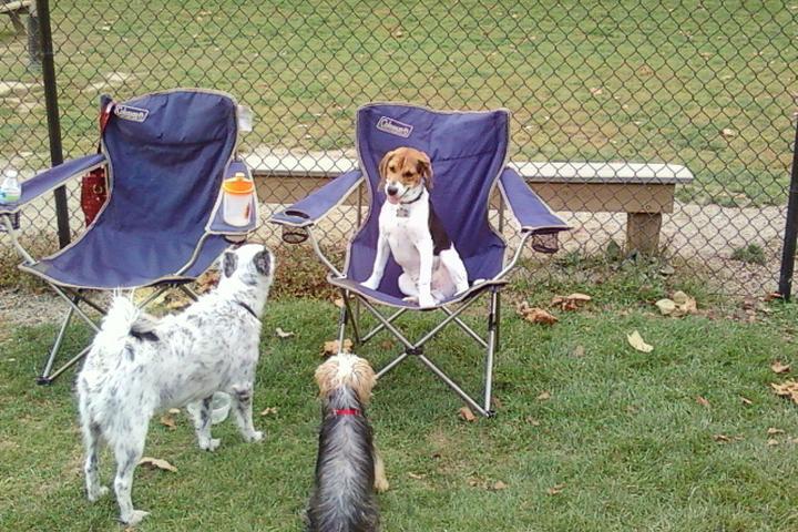 Pet Friendly Bradys Run Dog Park