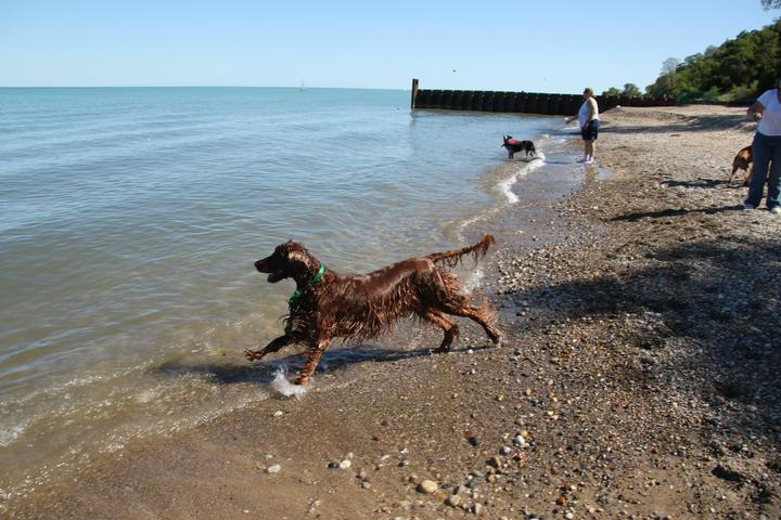 Pet Friendly Moraine Dog Beach and Park