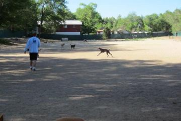 Pet Friendly Virginia Lake Dog Park