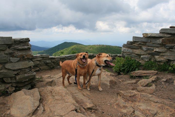 Pet Friendly Craggy Pinnacle Trail