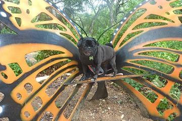 Pet Friendly Zilker Botanical Gardens