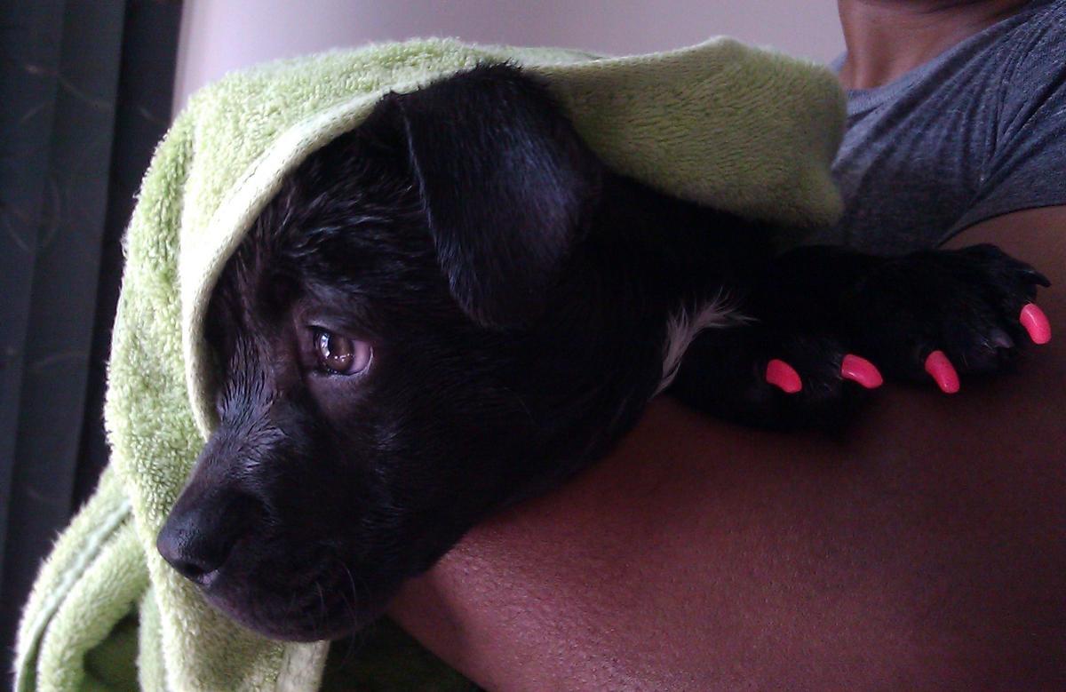 Dog Friendly Motels Manassas Va
