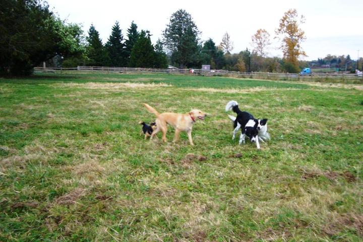 Pet Friendly Cavalero Hill Off-Leash Dog Area