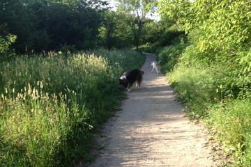 Pet Friendly Elm Creek Reserve Dog Park