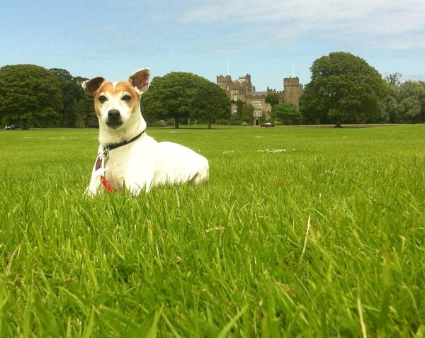 Dog Friendly Hotels Kerry