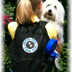 Gracie - THE DOG ON THE GO!
