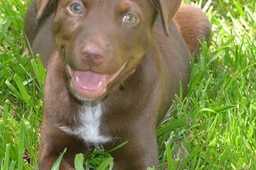 Pet Friendly Sacramento Independent Animal Rescuers