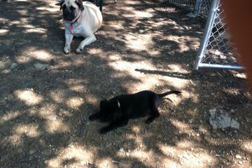 Pet Friendly Heritage Park Dog Park