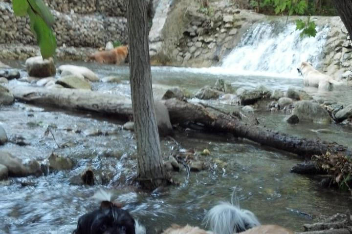 Dog Friendly Activities in Salt Lake City, UT - Bring Fido