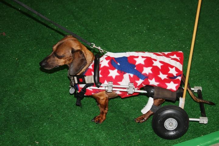 Pet Friendly Oktoberfest Northwest Wiener Dog Races