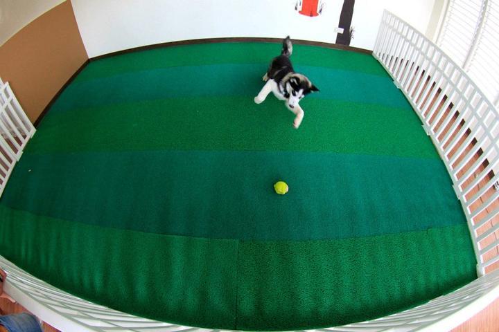 Pet Friendly The Dog Park
