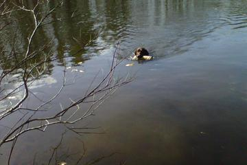 Pet Friendly Branford Supply Pond
