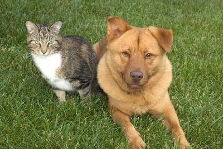 Pet Friendly Dog Days & Cat Naps, LLC