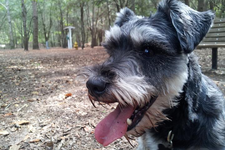 Pet Friendly Best Friends Dog Park/Chaplin Park
