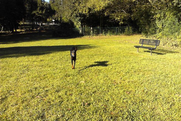 Pet Friendly Charter Doyle PetSafe Dog Park